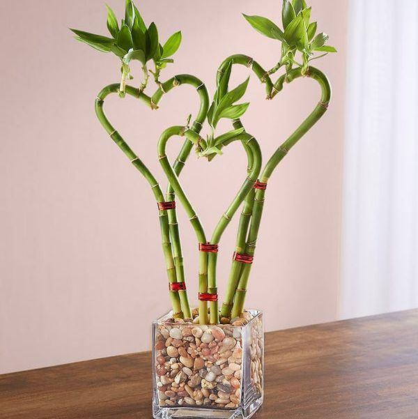 kalp şeklinde bambu